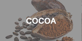 cocoa - International trading company