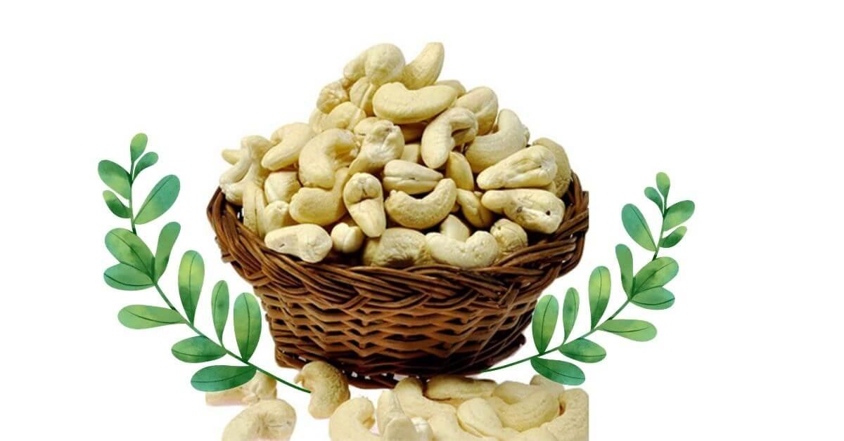 Cashew Nut Exporters