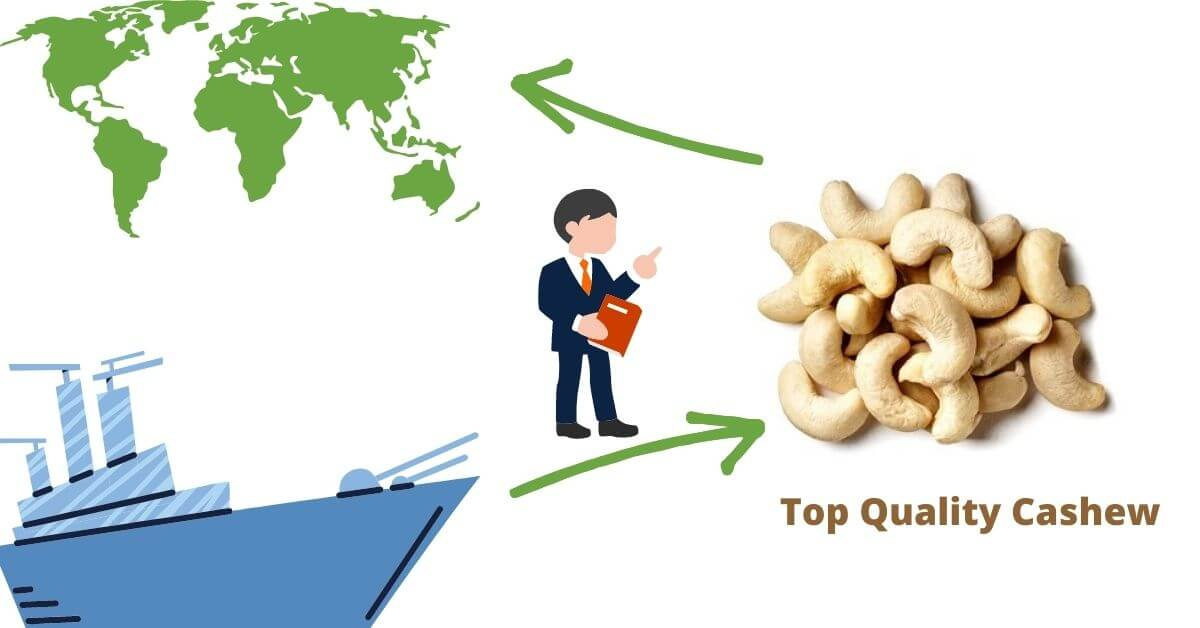 Top quality Cashew Nut Exporters