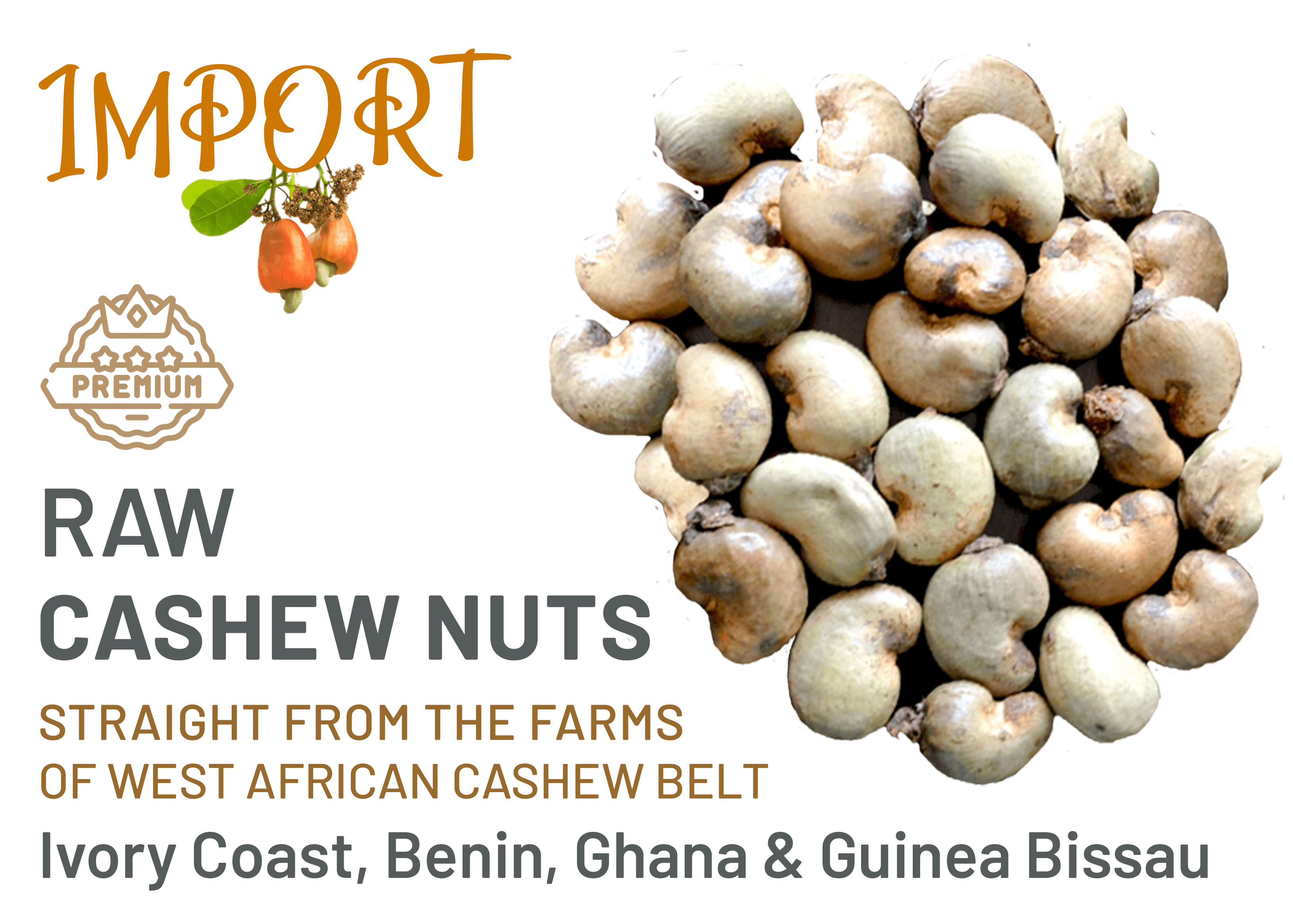 Raw Cashew Nuts and RCN Importers in India